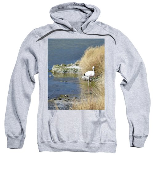 Juvenile Flamingo No. 64 Sweatshirt
