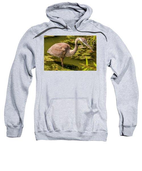 Juvenile Great Blue Heron Sweatshirt