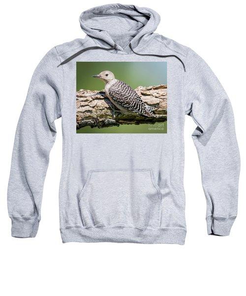 Juvenile Red-bellied Woodpecker Sweatshirt by Ricky L Jones