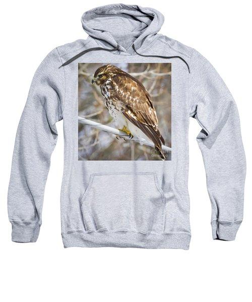 Juvenile Red-shouldered Hawk  Sweatshirt