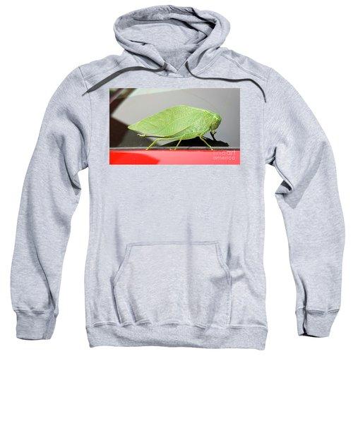 Katydids- Bush Crickets Sweatshirt