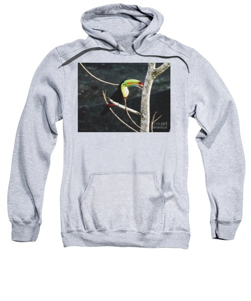 Keel-billed Toucan Sweatshirt