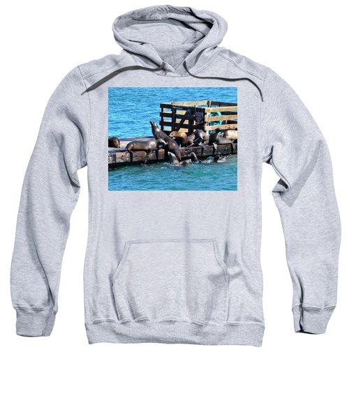 Keep Off The Dock - Sea Lions Can't Read Sweatshirt