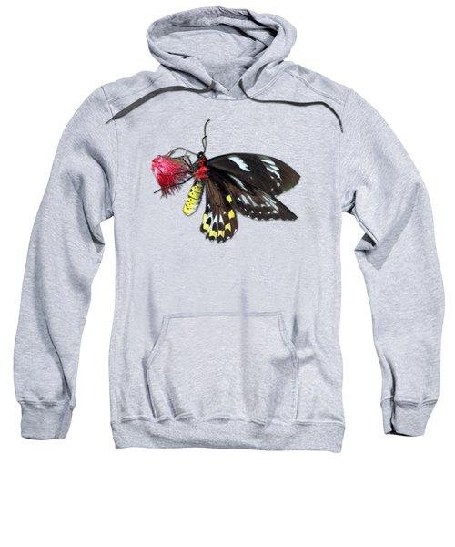 Key West Butterfly 12 Sweatshirt