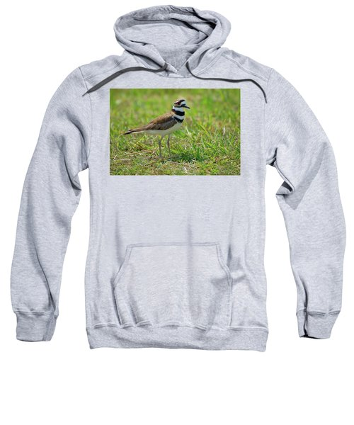 Killdeer Sweatshirt by Rich Leighton