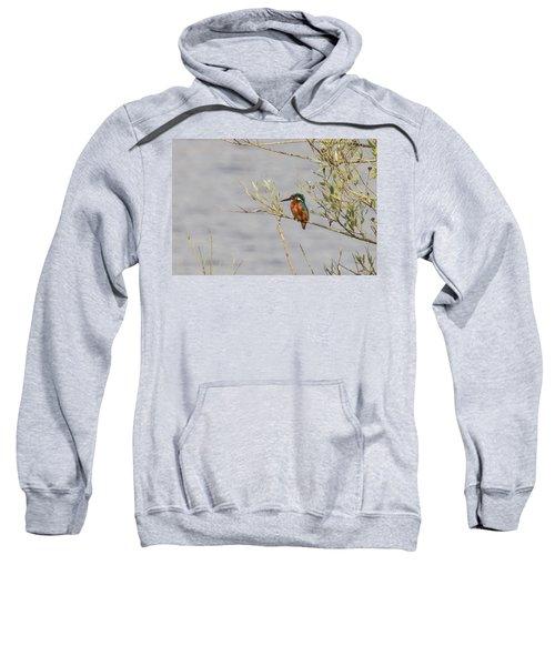Kingfisher Waiting Sweatshirt