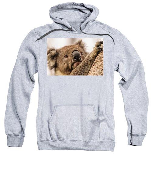 Koala 3 Sweatshirt