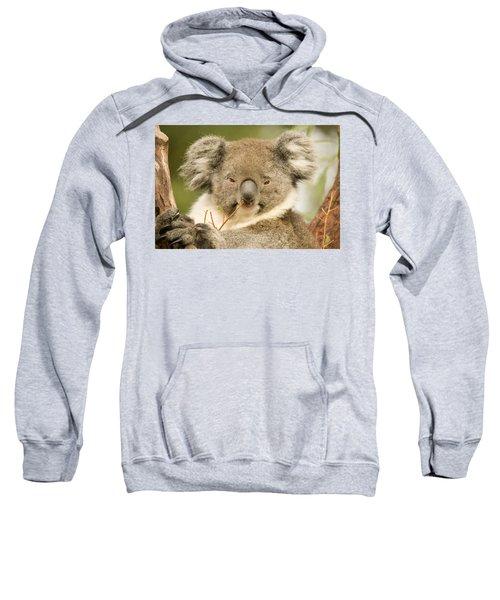 Koala Snack Sweatshirt