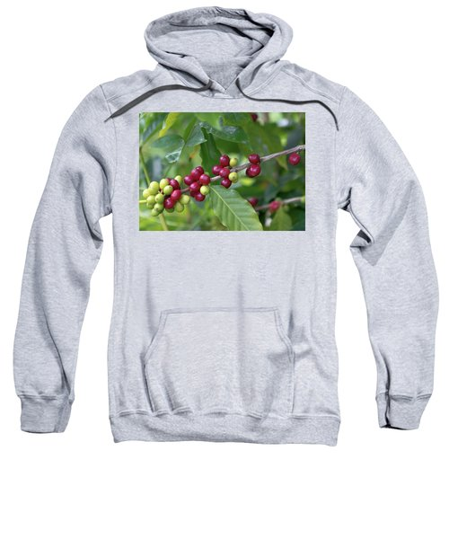 Kona Coffee Cherries Sweatshirt