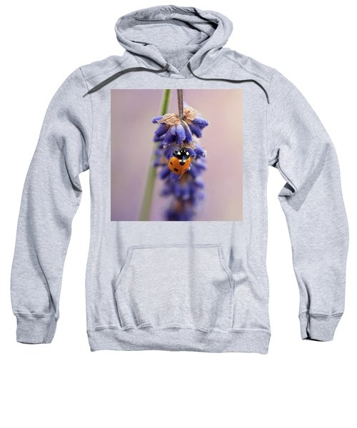 Ladybird On Norfolk Lavender  #norfolk Sweatshirt by John Edwards