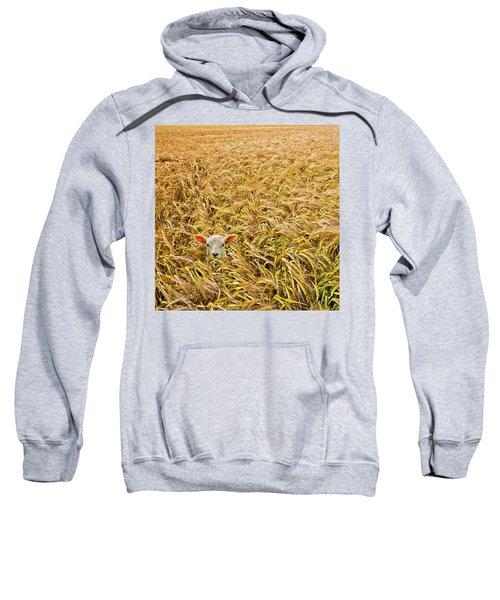 Lamb With Barley Sweatshirt