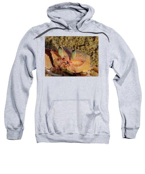 Lamu Island - Crab - Close Up 1 Sweatshirt by Exploramum Exploramum