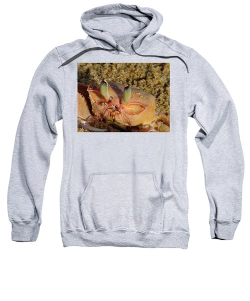 Lamu Island - Crab - Close Up 1 Sweatshirt