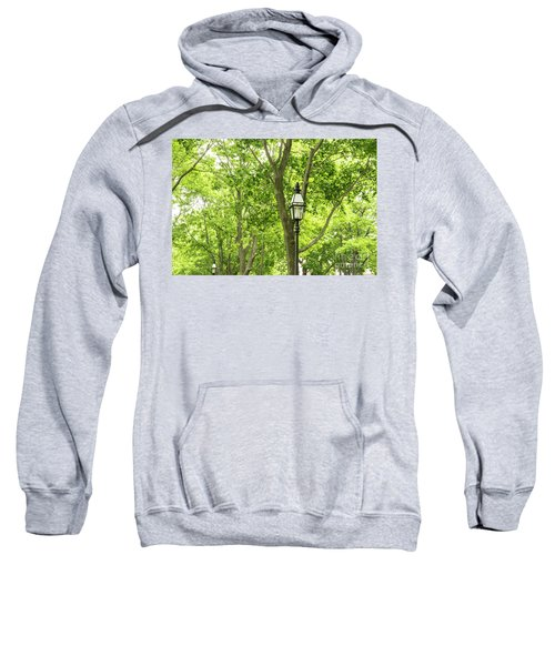 Lanterns Among The Trees Sweatshirt