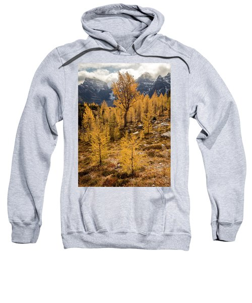 Larch Family Sweatshirt