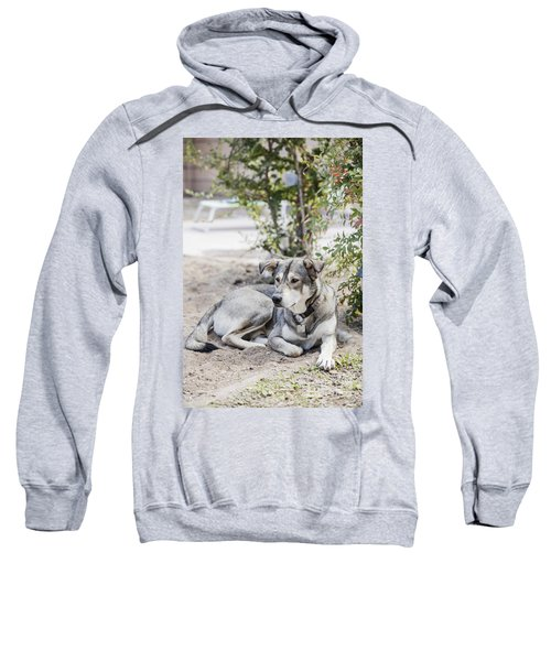 Lazy Dog Sweatshirt