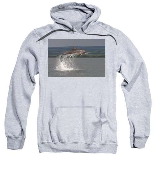 Leaping Bottlenose Dolphin  - Scotland #39 Sweatshirt