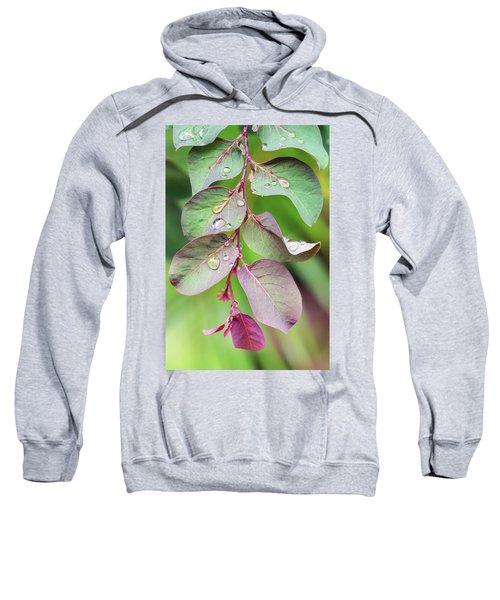 Leaves And Raindrops Sweatshirt