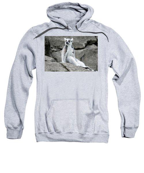 Lemur The Cutie Sweatshirt