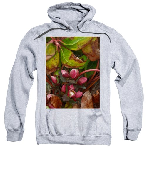 Lenten Rose Buds Sweatshirt
