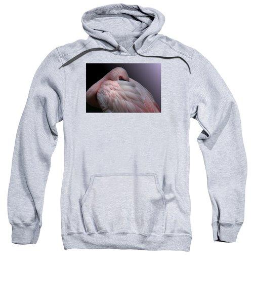 Lesser Flamingo Resting Sweatshirt