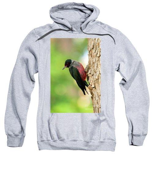 Lewis Woodpecker Sweatshirt