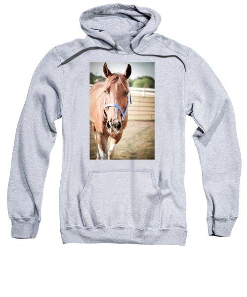 Light Brown Horse Named Flash Sweatshirt