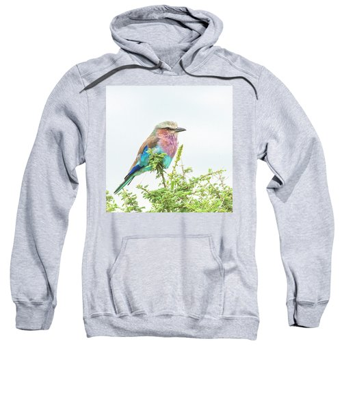 Lilac Breasted Roller. Sweatshirt