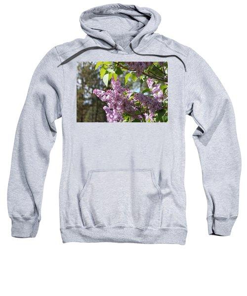Lilacs 5545 Sweatshirt