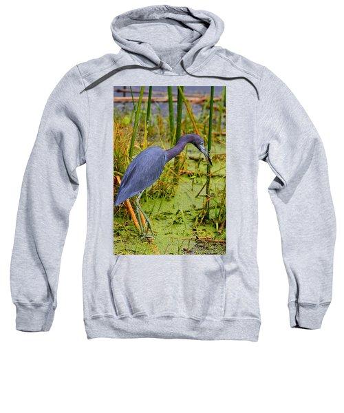 Little Blue Heron Feeding Sweatshirt