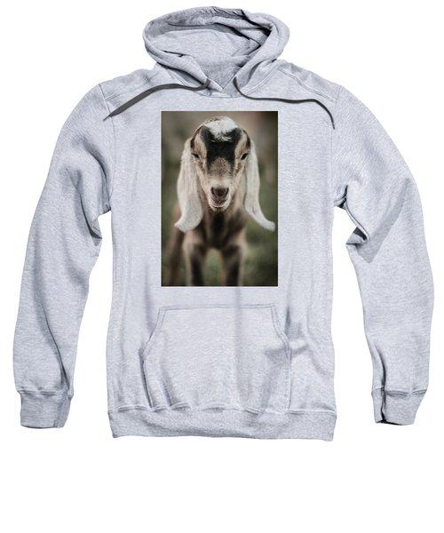 Little Goat In Color Sweatshirt