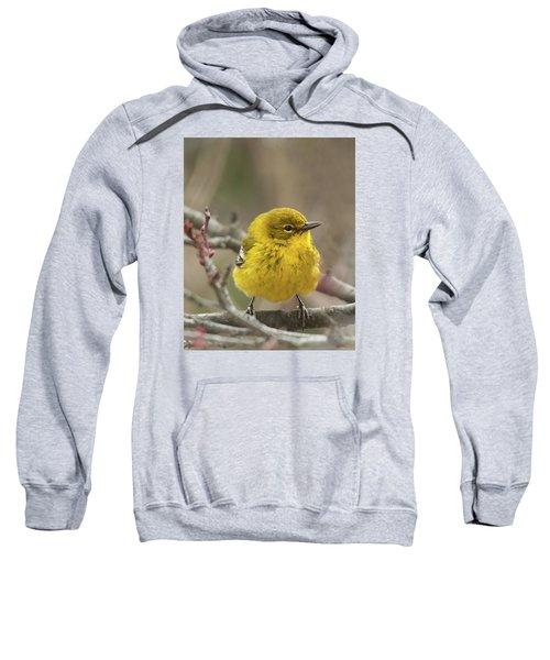 Little Yellow Sweatshirt
