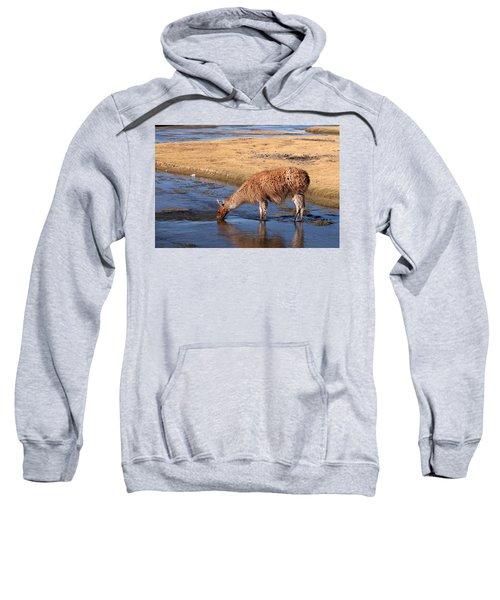 Llama Drinking In River Sweatshirt