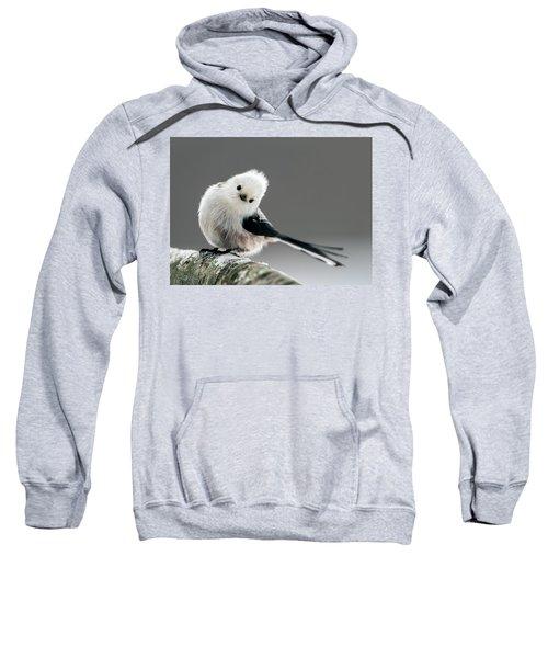 Charming Long-tailed Look Sweatshirt