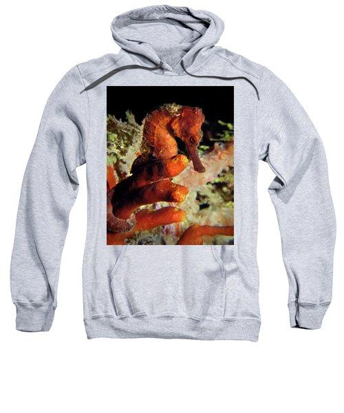 Longsnout Seahorse, St. Croix, U.s. Virgin Islands 2 Sweatshirt