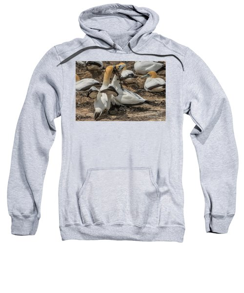 Look What I've Brought For You Sweatshirt