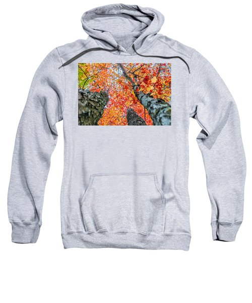 Looking Up - 9743 Sweatshirt