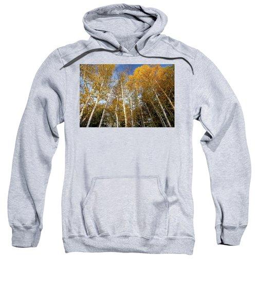 Looking Up Sweatshirt