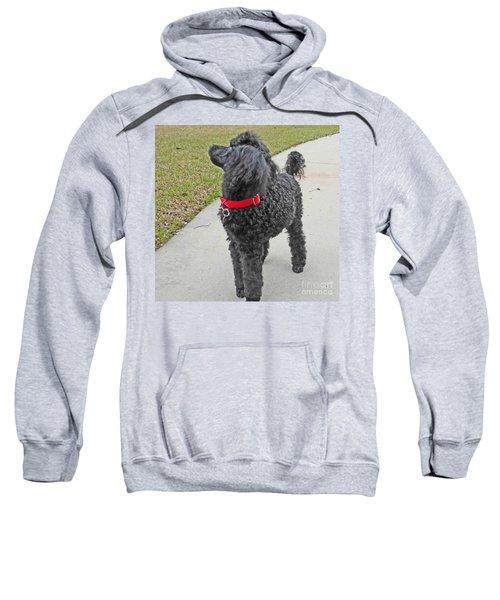 Maggie On Bird Watch Sweatshirt