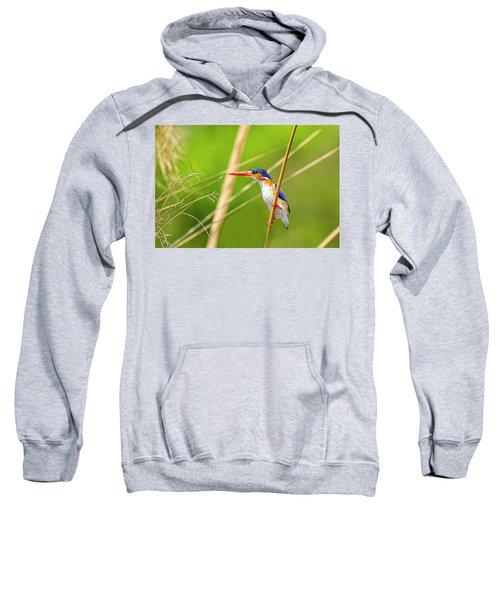 Malachite Kingfisher Sweatshirt