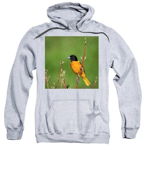 Male Baltimore Oriole Posing Sweatshirt