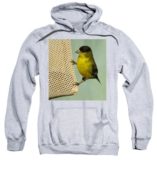 Male Goldfinch On Sock Feeder Sweatshirt