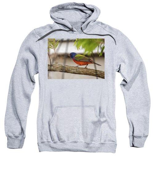 Male Painted Bunting Sweatshirt