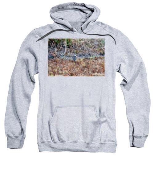 Male Quail In Field Sweatshirt