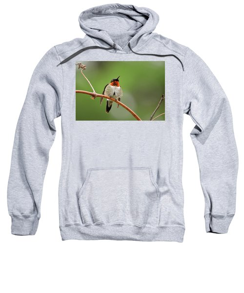 Male Ruby Throated Hummingbird Sweatshirt