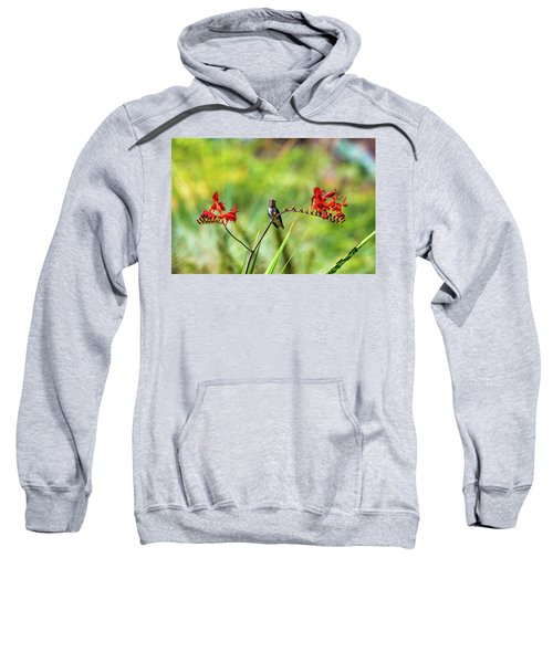 Male Young Hummingbird Perched Sweatshirt