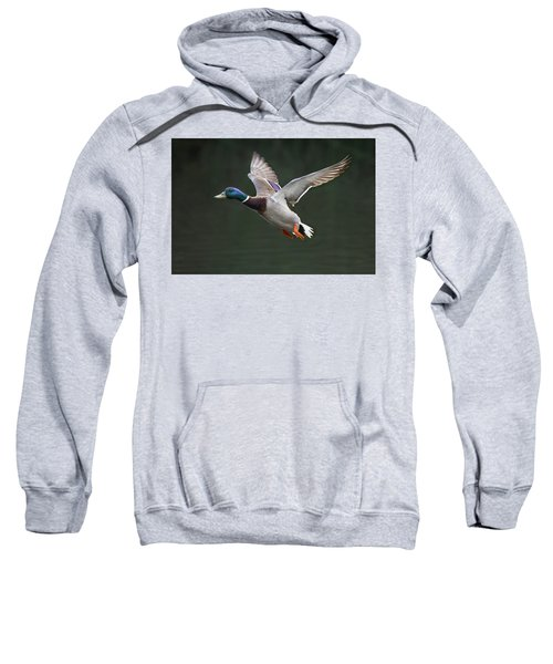 Mallard Drake In Flight Sweatshirt