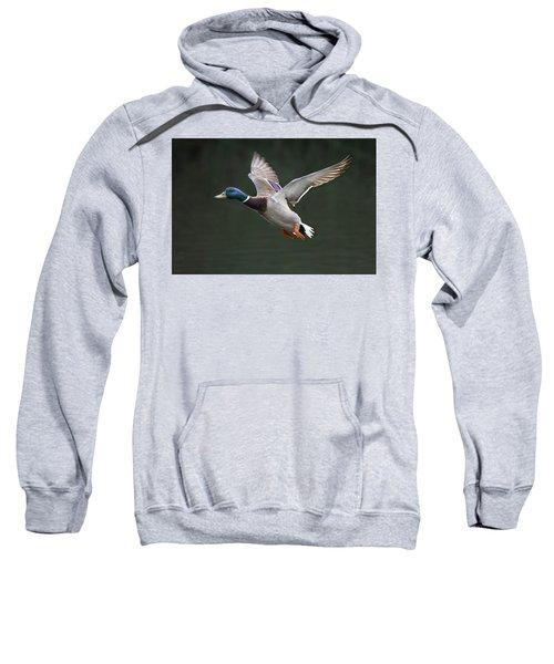 Mallard Drake In Flight Sweatshirt