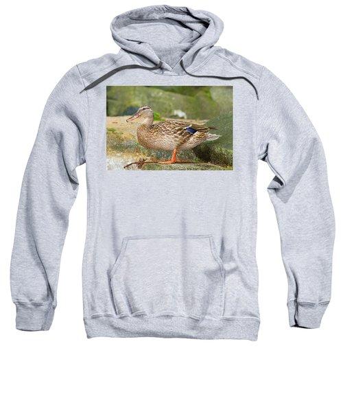 Mallard Duck Sweatshirt