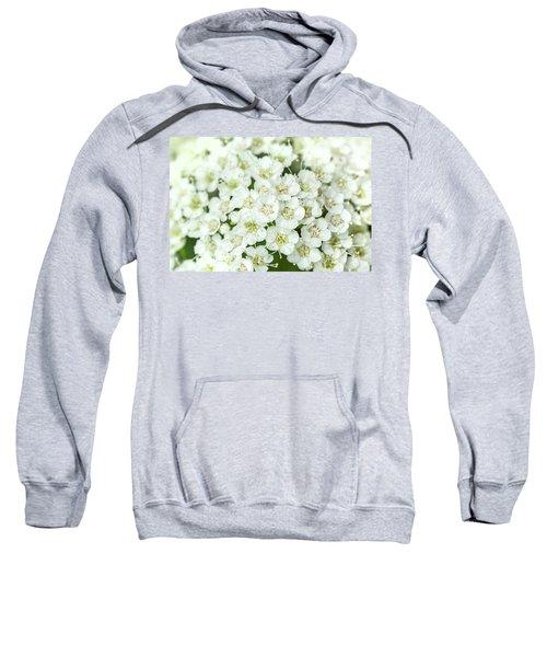 Mallow Ninebark Sweatshirt